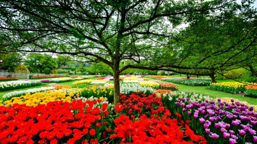 Longwood Gardens in Spring