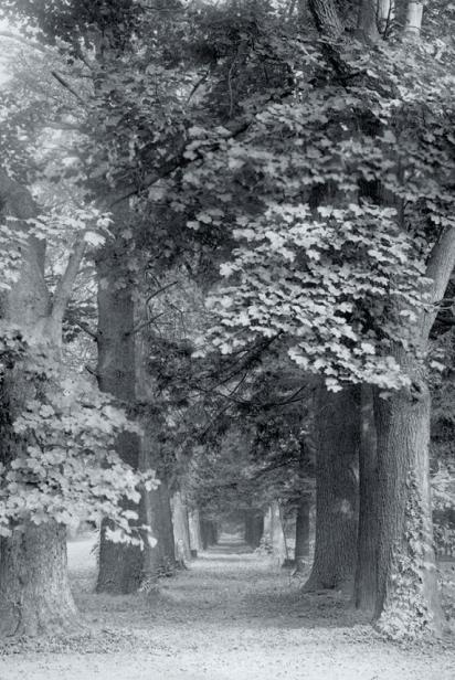 Peirce's Park, 1913